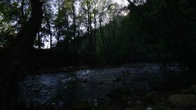 Jungle with stream timelapse. Scene stock footage