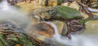 Jungle Stream X Royalty Free Stock Photo