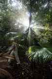 Jungle and Sunlight Stock Photo