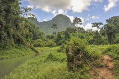 The jungle. A sunny day with clouds in the sky in a jungle Royalty Free Stock Photography