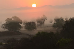 Jungle Sunrise Royalty Free Stock Photography