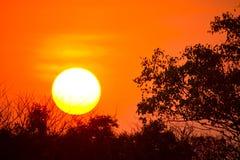 Jungle sunset. Sunset over the treetop,big sun, sunset Royalty Free Stock Photo