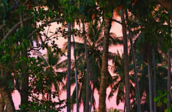 Jungle at Sunset Royalty Free Stock Images