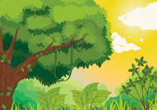 Jungle at sunset stock illustration