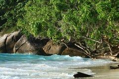 Jungle sur la belle île Photo libre de droits