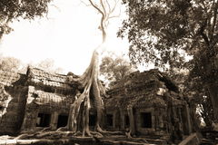 Jungle that surround of Angkor Wat Stock Photo