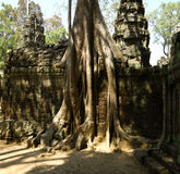 Jungle surround temple of Angkor Wat Royalty Free Stock Image