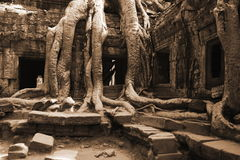 Jungle that surround temple of Angkor Wat in Cambo Royalty Free Stock Image