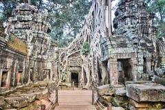 Jungle temple. Angkor temple in Cambodia. Jungle temple ruin of Ta Prohm Stock Photo