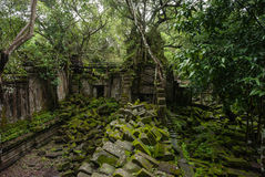 Jungle Temple Stock Photo