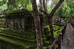 Jungle Temple Stock Photo