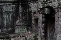 Jungle temple ta prohm in cambodia Stock Image