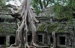 Jungle temple ta prohm in cambodia Royalty Free Stock Photo