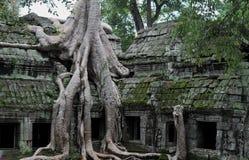 Jungle temple ta prohm in cambodia Royalty Free Stock Photo