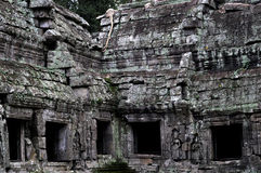 Jungle temple ta prohm in cambodia Royalty Free Stock Images