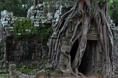 Jungle temple ta som in cambodia Stock Photo