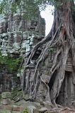 Jungle temple ta som in cambodia Stock Image