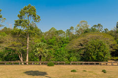Jungle on the territory of Lame Angkor Wat Stock Photos