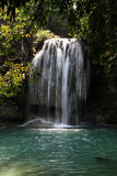 Jungle in Thailand stock photography