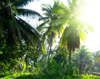 Jungle of Thailand Royalty Free Stock Image