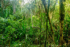 Jungle in Thailand. Khao Sok National Park, Surat Thani Province, Thailand. Soft Focus Royalty Free Stock Photos