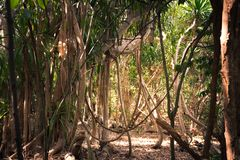 Jungle in Thailand, Ko Kham island stock photo
