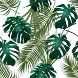 Jungle thickets of tropical palm leaves and monstera. Seamless floral pattern. Isolated on a white background Royalty Free Stock Photos