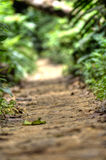 Jungle Trail. On a jungle trail trough the woods Stock Images