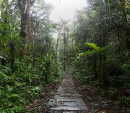 Jungle trail in the amazon rain forest royalty free stock image