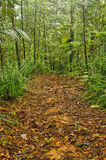 Jungle trail, Costa Rica royalty free stock image