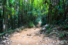 Jungle trail Royalty Free Stock Image