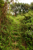 Jungle Trail Hillside Steps. A pathway of overgrown jungle steps cut into a hillside Royalty Free Stock Photos