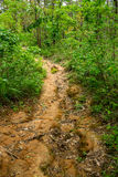 Jungle trail. Leads to the top of a mountain at some place in rural area Stock Images