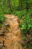 Jungle trail. Leads to the top of a mountain at some place in rural area Royalty Free Stock Image