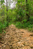 Jungle trail. Leads to the top of a mountain at some place in rural area Stock Photography