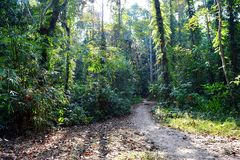 Jungle Trail - Path through Green Trees - Tropical Forest in Andaman Nicobar Islands, India. This is a photograph of a raw path through green trees in tropical royalty free stock photos