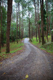Jungle trail in pine forest Stock Photo