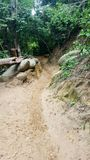 Jungle Trail. Sand path through the jungle near cabo san juan in tayrona national park Royalty Free Stock Images