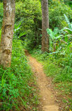 The jungle trail. In thailand Stock Images