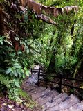 Jungle. Trail tropical Forrest south America Royalty Free Stock Images