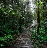 Jungle trail winding trough the Amazon rain forest of Colombia royalty free stock images