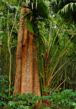 Jungle tree Stock Image