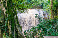 Jungle tree with bindweed and moss and Waterfall Prenn in Dalat, Vietnam. Jungle river stream with bindweed under water stock photos