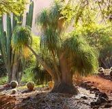 Jungle Tree In Hawaii Stock Photography