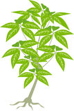 Jungle tree plant Stock Image
