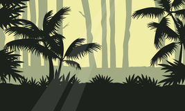 Jungle with tree silhouette beauty landscape Royalty Free Stock Photo