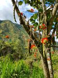 Jungle tree. South America flowers nature scenery Stock Images