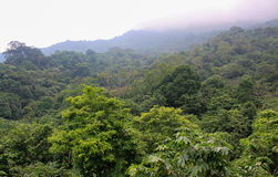 Jungle Tree Tops. Lush jungle tree tops as far as the eye can see, which steadily fade into the mist. Taken in Ba Vi National Park, Vietnam stock photography