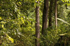 Jungle and trees Royalty Free Stock Photos