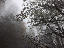 Jungle trees in the fog royalty free stock image